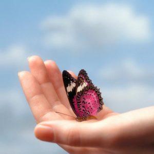 Притча за пеперудата